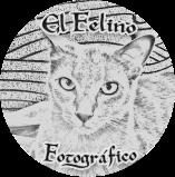 Felino Fotográfico 4